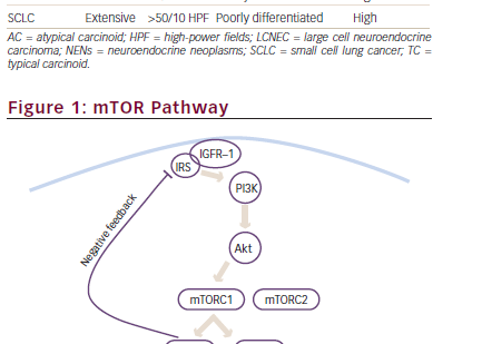 Mammalian Target of Rapamycin (mTOR) Inhibition in Advanced Bronchial Carcinoids