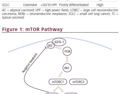 Mammalian Target of Rapamycin (mTOR) Inhibition in Advanced Bronchial Carcinoids
