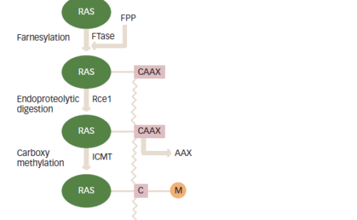 Significance of Ras Signaling in Cancer and Strategies for its Control