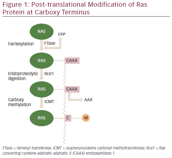 Significance Of Ras Signaling In Cancer And Strategies For