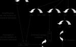 Elevated Coagulation Factor IX and Risk of Thrombosis Development