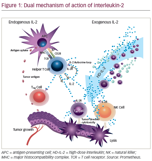 Cancer Immunotherapy With Interleukin 2 Current Status And Future Developments Touchoncology