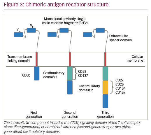 Figure 2: T cells are genetically engineered to produce chimeric antigen receptors on their surface