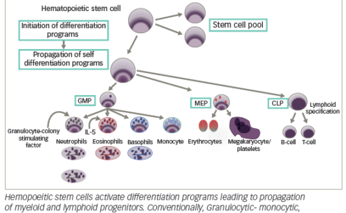 Cytogenetic, Inflammatory, Immunologic, and Infectious Basis for Dysplastic Hematopoeisis