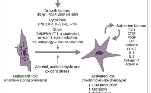 More than a Gel – Hyaluronic Acid, a Central Component in the Microenvironment of Pancreatic Cancer