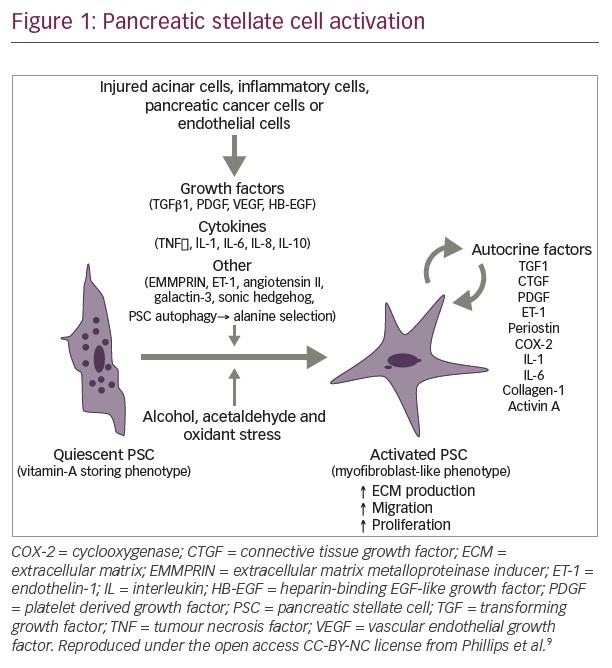 Figure_1_Pancreatic_stellate_cell_activation