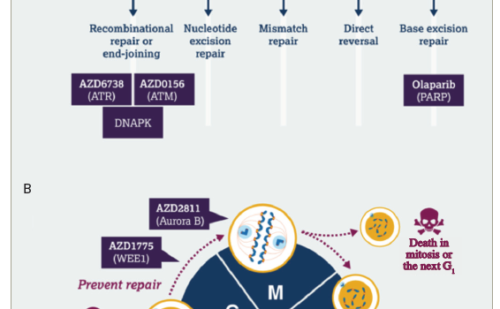 DNA Damage Response – An Emerging Target for Groundbreaking Cancer Therapies