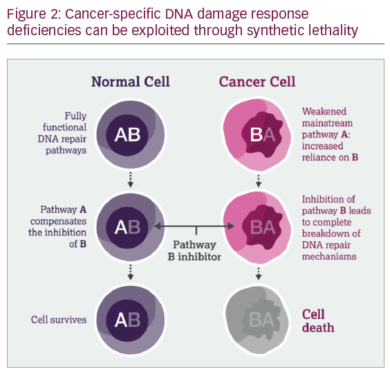 DNA Damage Response – An Emerging Target for Groundbreaking