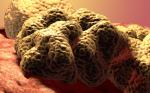 NGR-hTNF plus Doxorubicin in Recurrent Ovarian Cancer