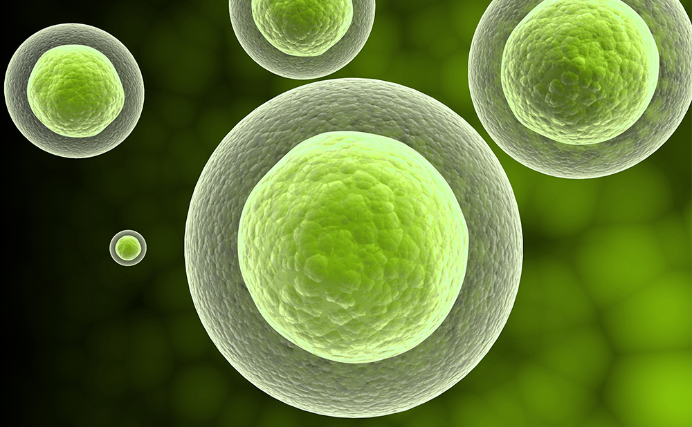 Realising the Promise of Cell Therapy – The Automated In-house CAR T cell Manufacturing System